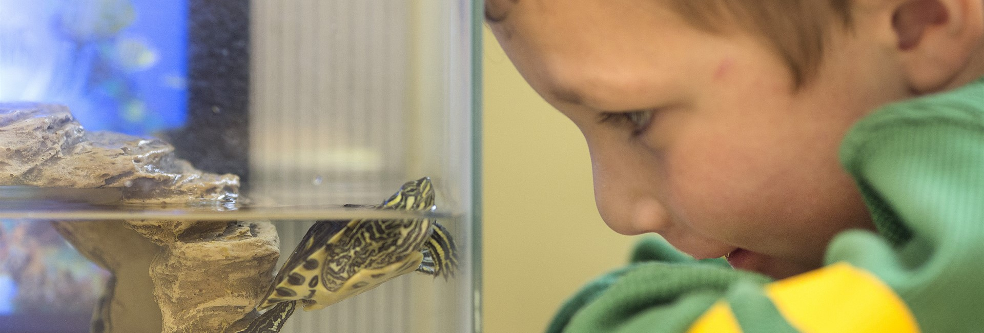 Student and turtle see eye to eye.